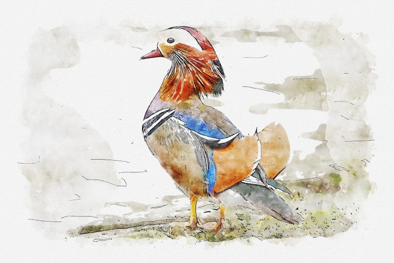 Mandarin painting for download